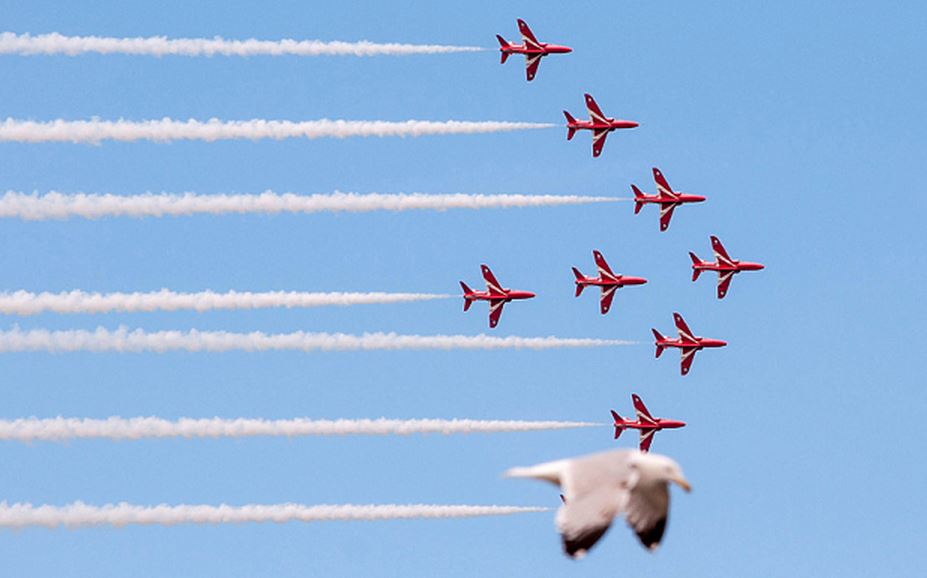 Red-Arrows-and-seagull Photo: SWNS Group